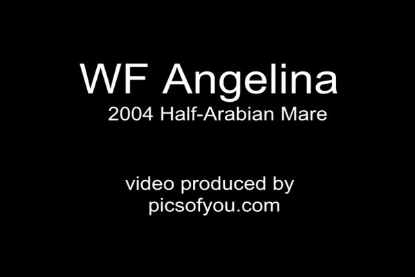WF Angelina