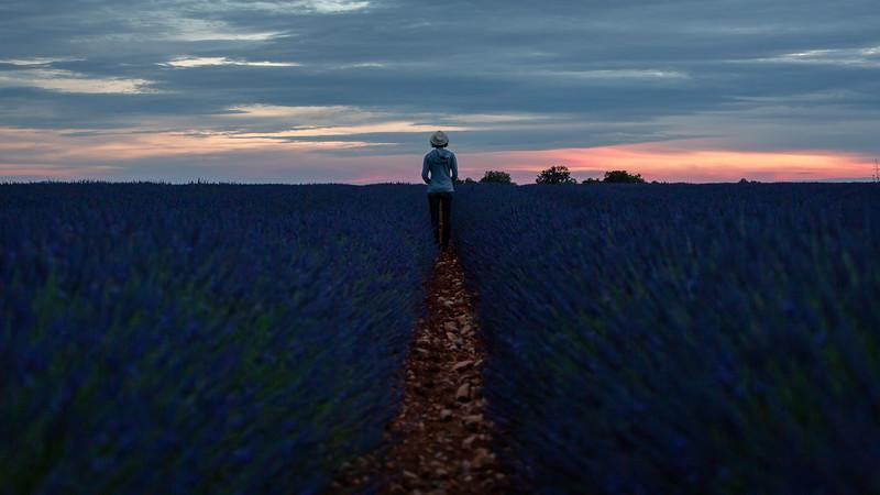 valensole-lavande-lavender-sunset_D3_4081-HDR.jpg