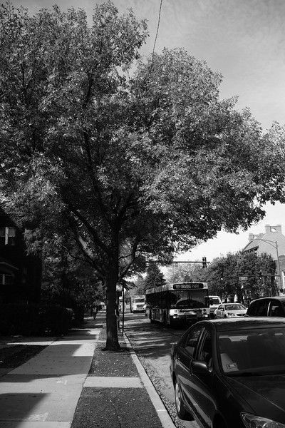 Irving Park under the Trees