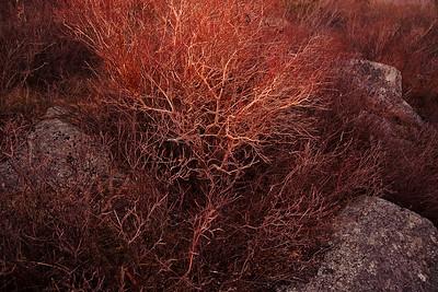 Twelve from 2015  -  Landscape Retrospective