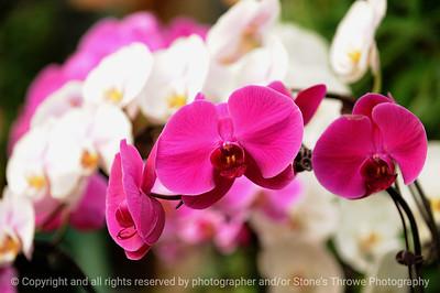 015-flower-dsm-14jan09-1177