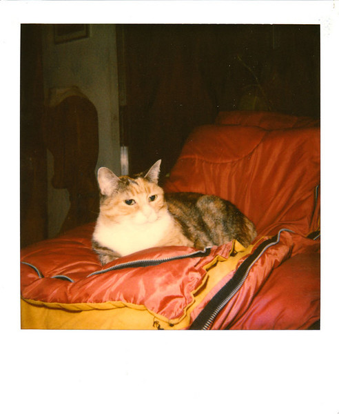 Polaroid_0072-XL.jpg