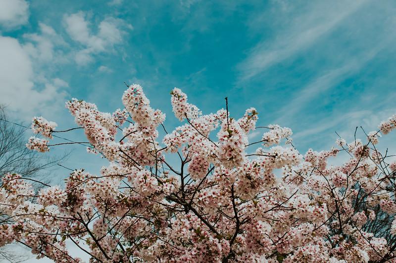 Spring in Quarantine, VCU.