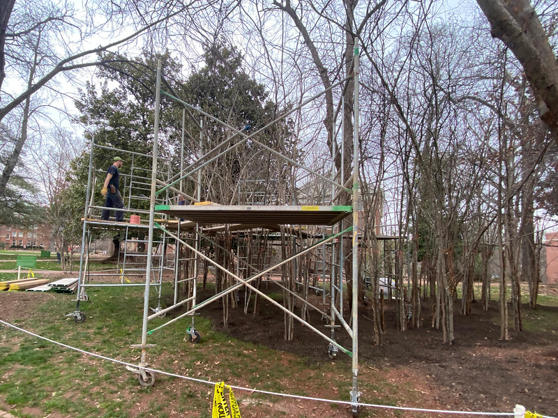 Volunteers spent day two on the installation site building the scaffolding platforms that will be used by artist Patrick Dougherty.