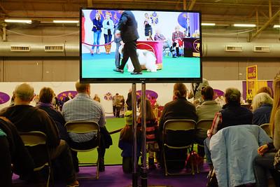 Westminster Dog Show - Feb_16_2015