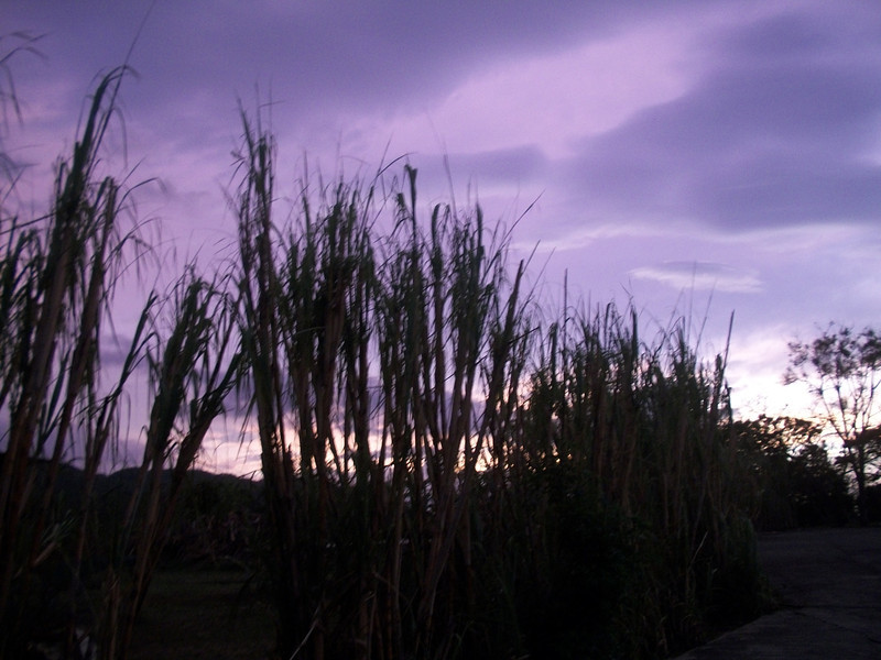 SunsetPurpleApril1.jpg