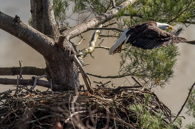 ulster-eagle-105.jpg