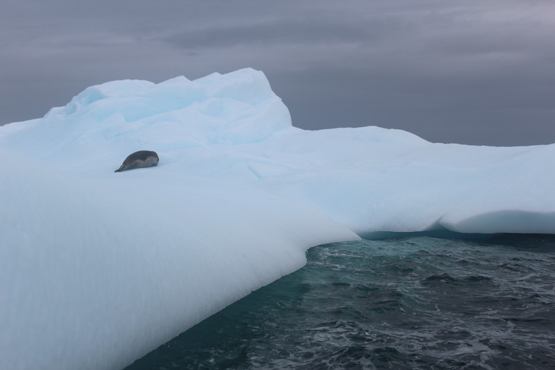 Antarctica 266.JPG