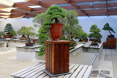 National Bonsai & Penjing Collection