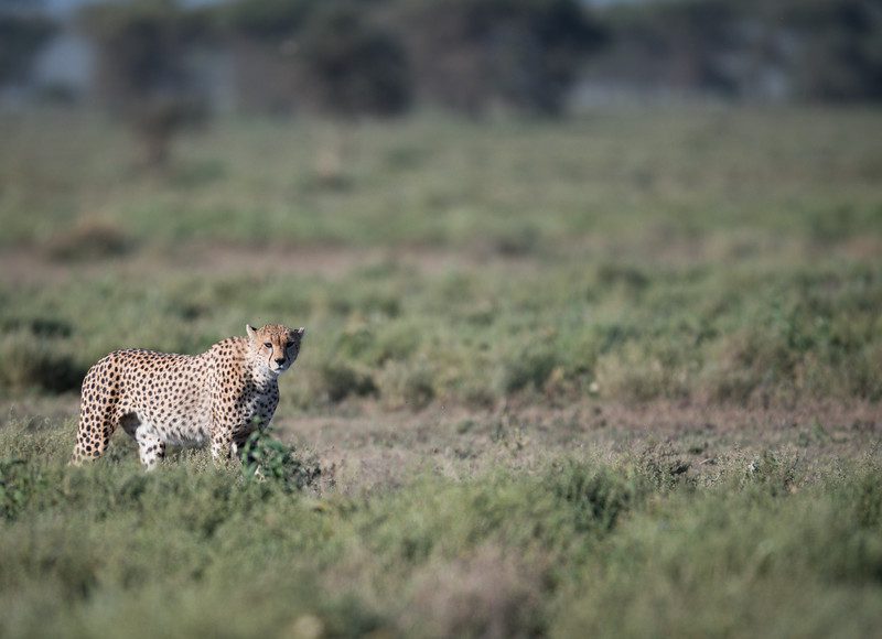 Tanzania_Feb_2018-243.jpg