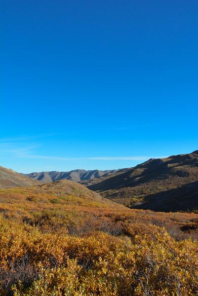 Denali-National-Park-78.jpg