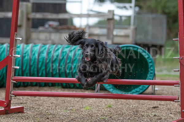 Agility with Claudia 15 August 2018