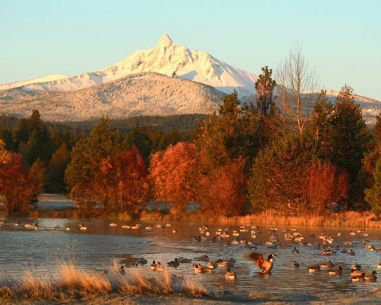 fall mt w geese 110805 IMG_1256 300 dpi 8x10  copy.jpg