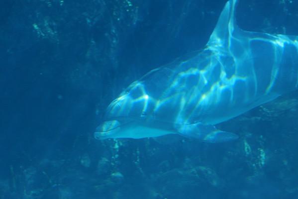 Sea World Orlando 5/31/2008