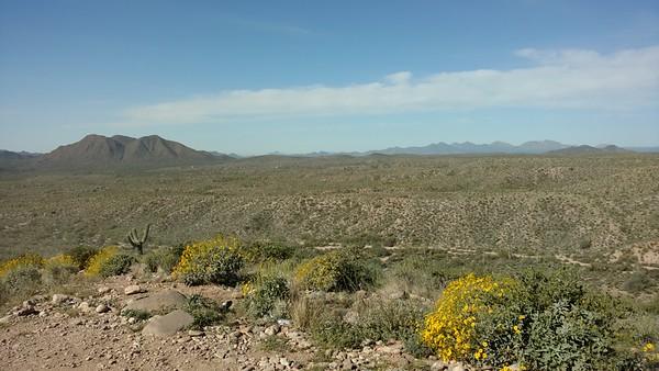 2-5-16 patel landscape