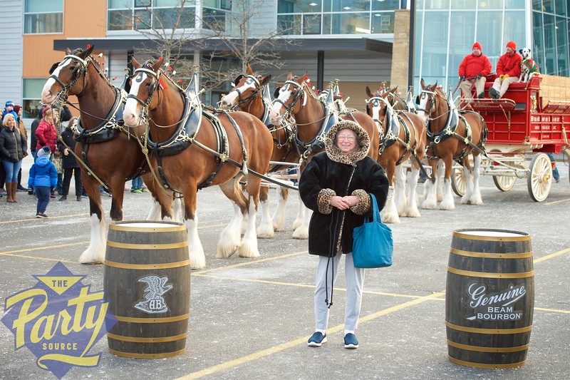 Clydesdale Portraits 165.jpg