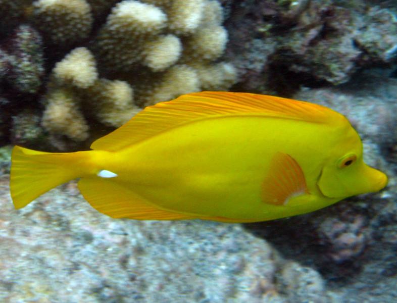 462- 20080416- Hawaii 20-Snorkelling IMG_0651.jpg