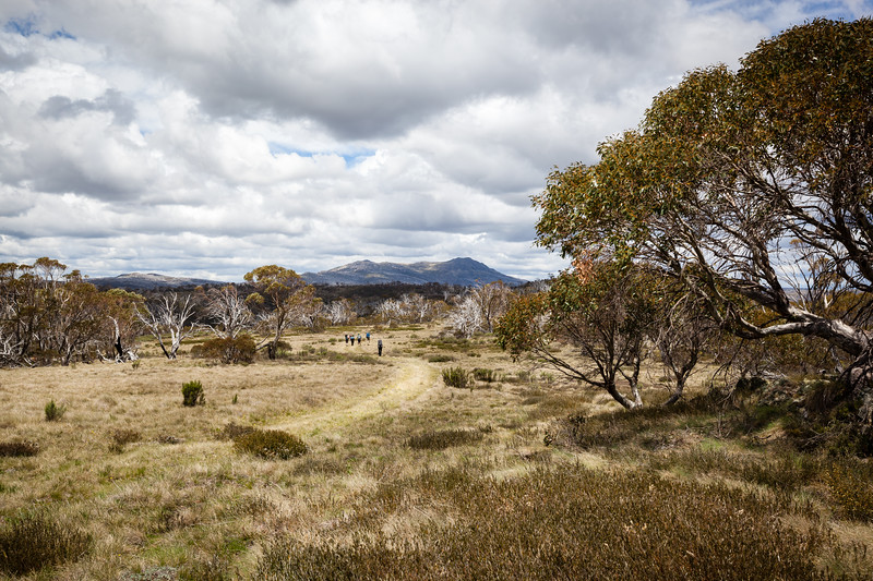 On the way to Mt Jagungal : Kosciuszko NP : NSW