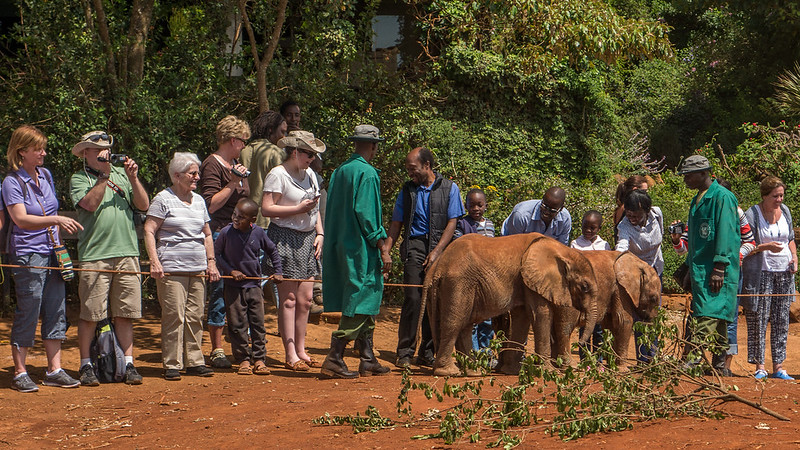David Sheldrick Wildlife Trust and Elephant Orphanage.