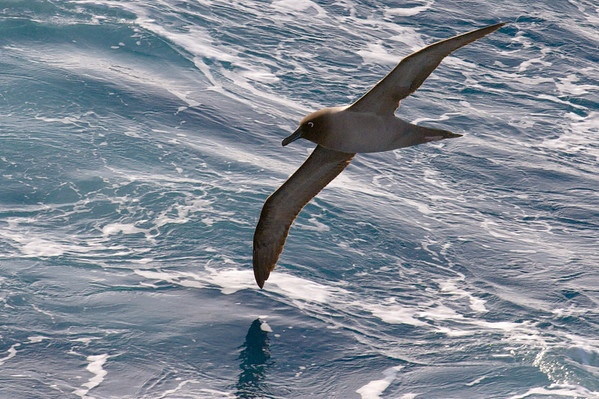 Antarctica November/December 2009
