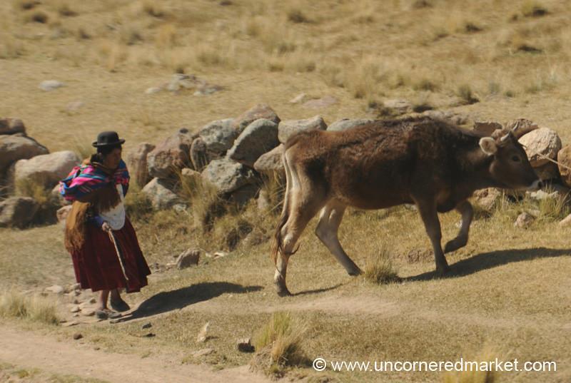 Walking Home With Cow - Puno, Peru to Copacabana, Bolivia