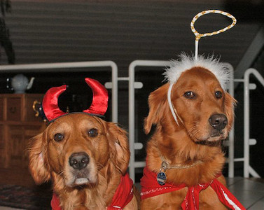 Halloween Dogs copy.jpg