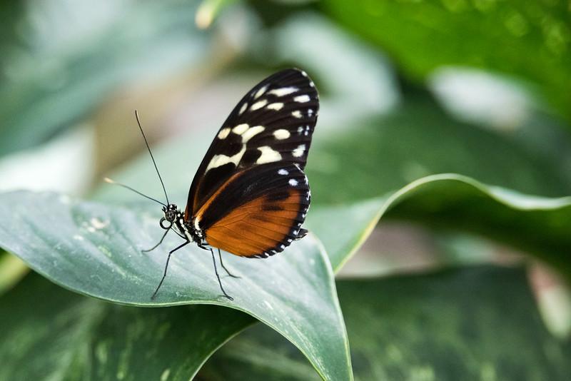 butterfly-293.jpg