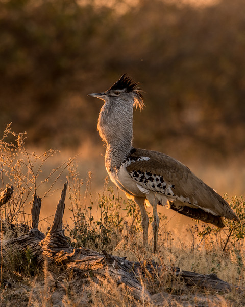 Botswana_June_2017 (4920 of 6179).jpg