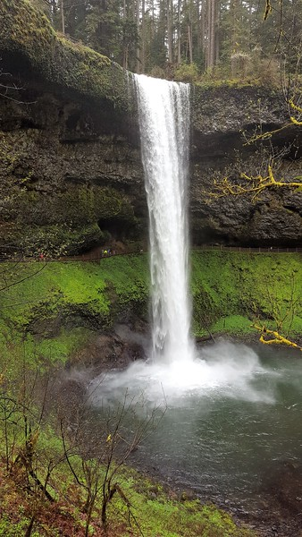 Waterfall plunging into a pool at Silver Falls State Park.
