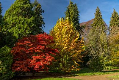 Autumn Colour at Batsford Arboretum, 2016