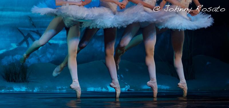 swan lake - linearCIak - milano 2016