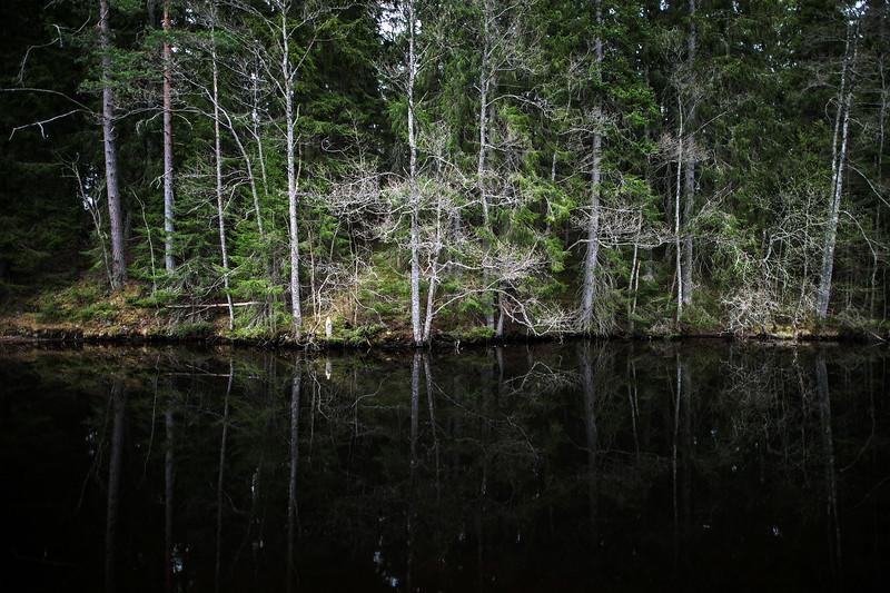 sweden forest reflection.jpg