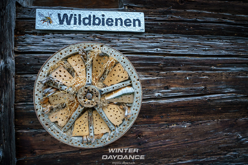 Winterdaydance2018_114.jpg
