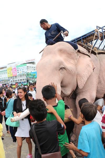 2014-11-14 Surin Elephant Welcome Feast 644.JPG
