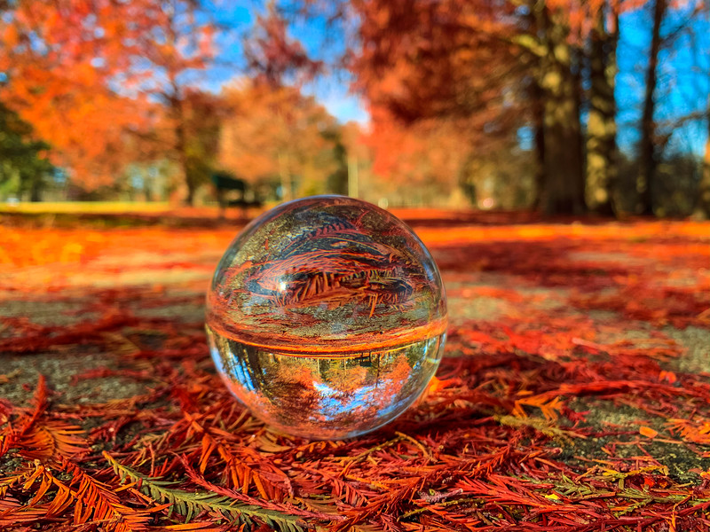lens ball fall foliage