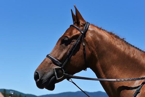 2019 Lake Placid Horseshows