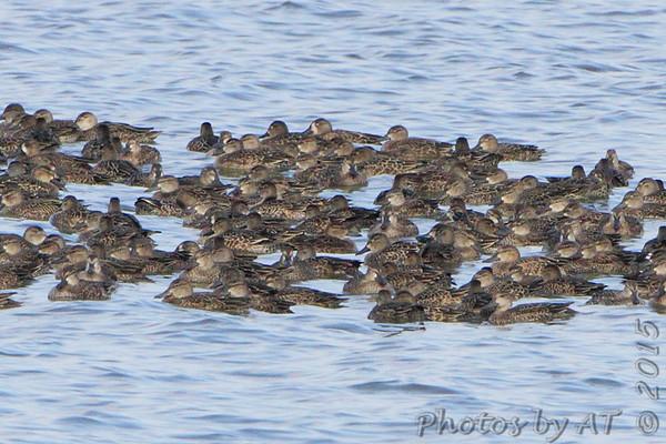 2015-10-07 Riverlands Migratory Bird Sanctuary