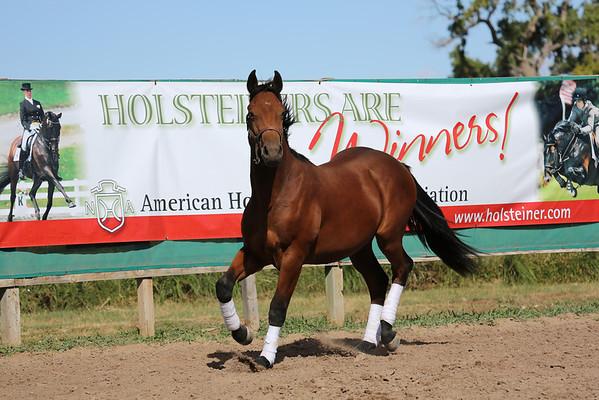 American Holsteiner Horse Association Approvals