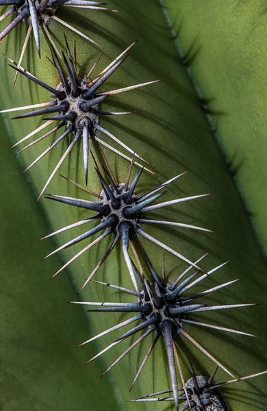Douglas Spring Trailhead - Tucson, Arizona - 2020