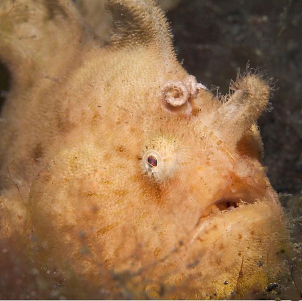 fish frog fish 51.jpg