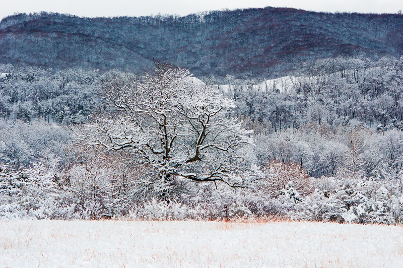 Winter.2017.March.LG.JPG-2528.jpg