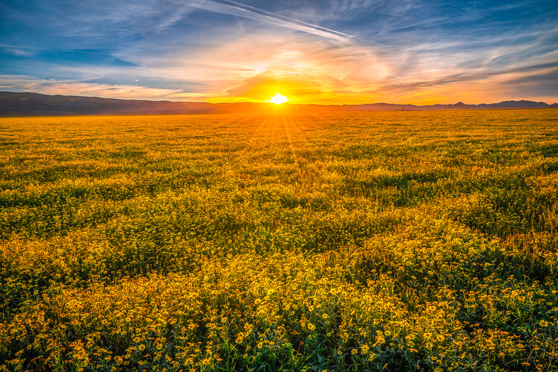 Carrizo Plain National Monument Wildflowers Superbloom Spring Symphony #4!  Elliot McGucken Fine Art Landscape Nature Photography Prints & Luxury Wall Art