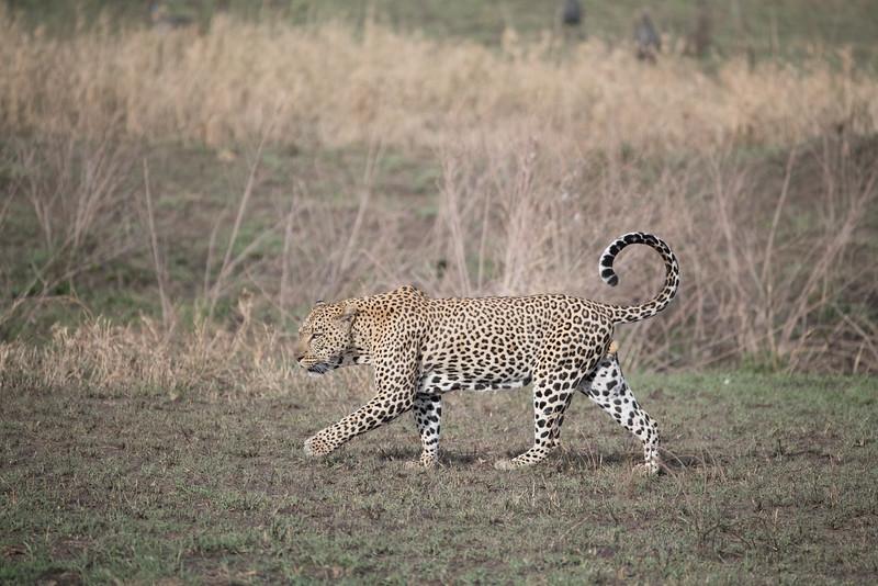 Africa - 101616 - 5679.jpg