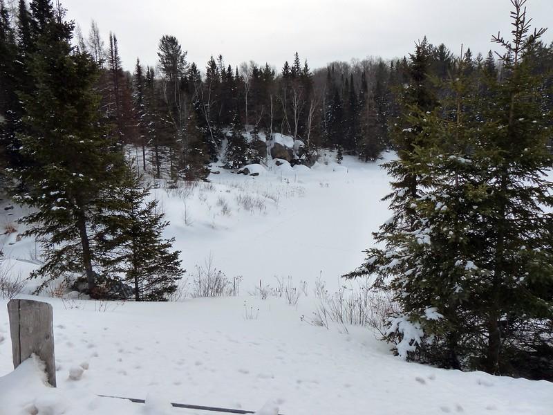 Northern River Otter - slide, (mid-photo)