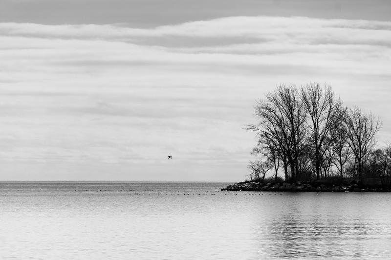 Winter Birds, Lake Ontario