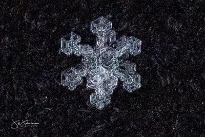 snowflakes-1766.jpg
