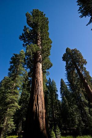July 2007 Yosemite & Gold Country Trip