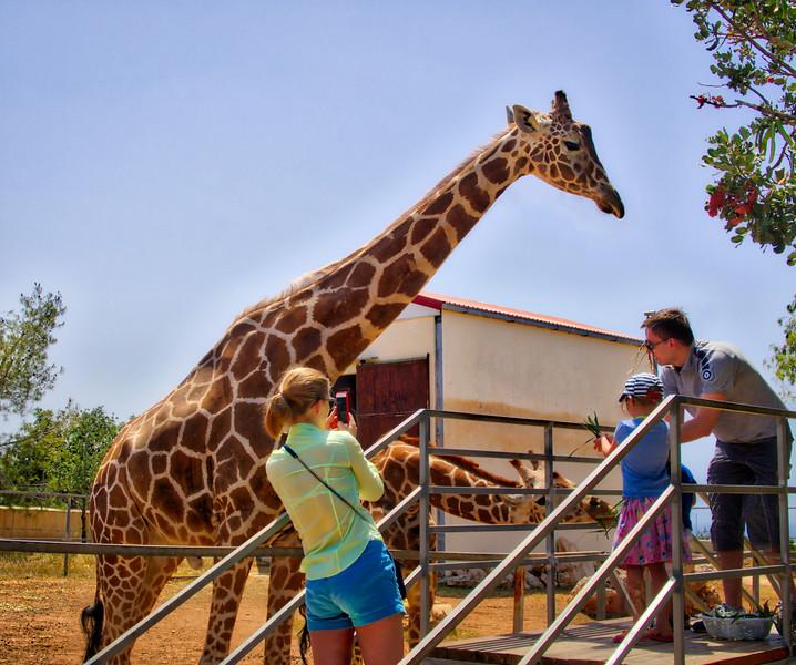 Feeding the giraffes in Paphos Zoo