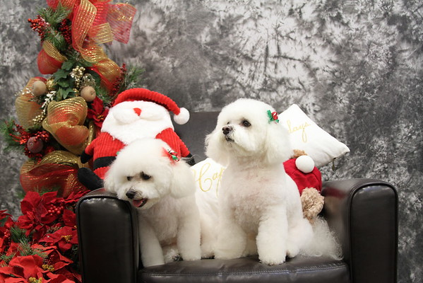 Christmas Pictures 2014