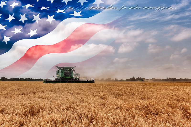 Wheat Harvest June 2014 16.jpg
